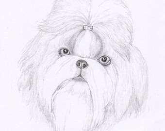 Shih Tzu Signed Personalized Original Pencil Drawing Double Matted Print -Free Shipping- Desert Impressions