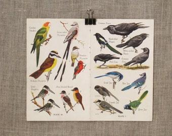 Book Plate , Bird Watchers Guide , Bird Book Plate , Birds , Aviary , Natural History , Illustration , Collage , Art Supplies , Craft Supply