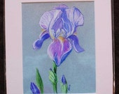 Purple Iris - reproduction print light rose mat