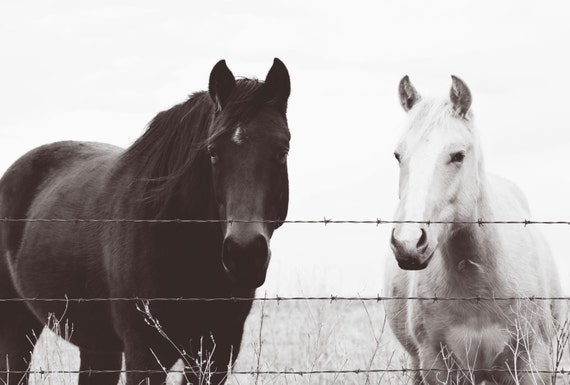 Horse photography, southwest, midwest, wall decor, equestrian, western, black, white, Country Kitchen & Living Room