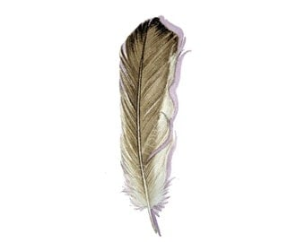 Sparrow Feather Watercolor - Original watercolor study