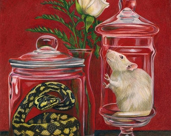 Curio - 5x7 inch giclee print matted to fit an 8x10 frame Snake Rat still life