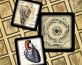 "Gross Anatomy .75"" x .83""  scrabble tiles digital collage sheet--Instant Download"