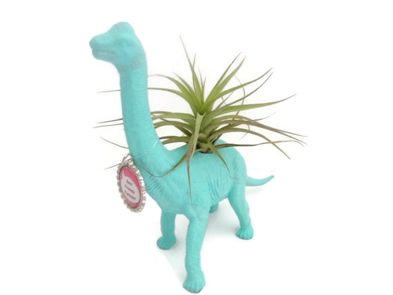 Dinosaur planter with air plant and personalized bottlecap. Featured in Parenting Magazine.