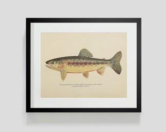 Adult Male Golden Trout Soda Creek California Fish Print