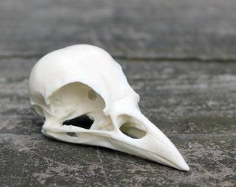 resin jackdaw skull replica