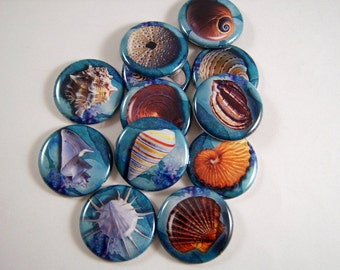 "Sea Shells, Sea Shell Magnets, Sea Shell Pins, Beach Magnets, Beach Pins, Ocean Life Magnets, Ocean Treasures, 1"" Flat, Cab, Hollow BK, 12ct"