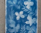 "Original Cyanotype Photogram of Flowers and Leaves - 11.5"" x 15.25"""