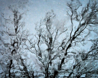 Branches 8x12 Fine Art Abstract Photograph - Puddle Reflection