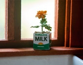 Miniature Marigold in a Milk Carton Kit