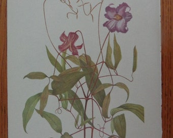 SOUTHERN Series, 1953 Wildflower Bookplate, Blue Jasmine Clematis, Gorgeous Matte Cream,  MORE in shop for grouping, singles