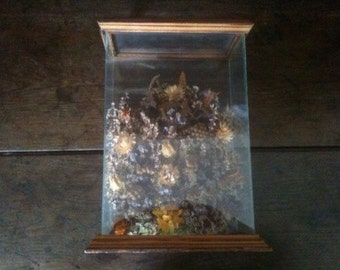 Vintage English dried flowers in a glass display box circa 1960-70's / English Shop