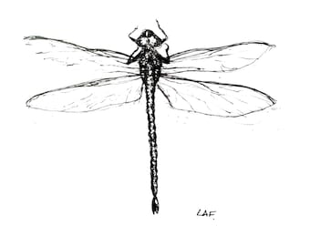 Original Drawing or Limited Edition Print-Dragonfly 2 in black pen and ink . insects.