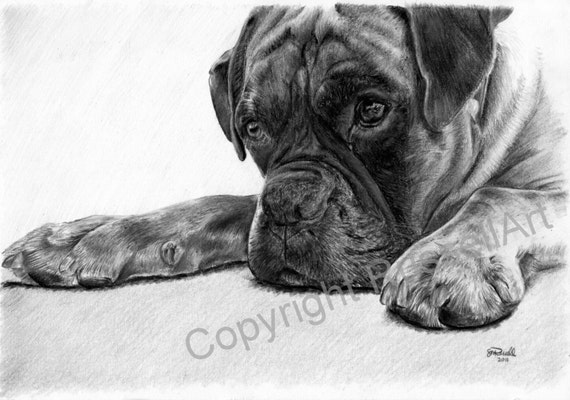 Time Out B&W - Boxer Dog LARGE A4 A3 or A2 Limited Edition Art Print of original pencil drawing by Steve Russell of RussellArt