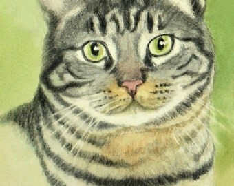 Tabby Cat Art, Tabby Cat Print, Tabby Art, Cat Art Print from Watercolor & Colored Pencil Painting by P. Tarlow