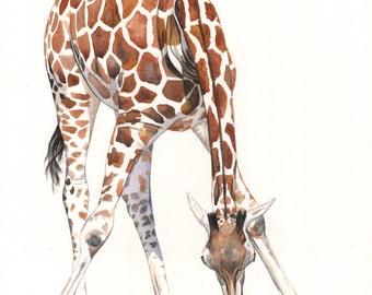 Giraffe Painting - 2014  giraffe watercolor painting - print of watercolor painting A4 size medium print