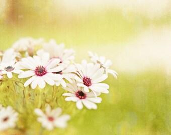 "Yellow Photography, light flower white pale daisies photo floral nursery photograph large wall art baby botanical 10x10, 24x24, ""Sunshine"""