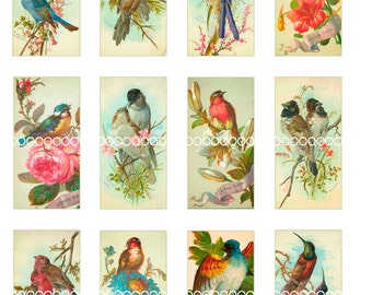 Digital Clipart, instant download, Vintage Bird Images, Songbirds, Lovebirds--1.5 by 3 Inch--Digital Collage Sheet (8.5 by 11 inches) 197