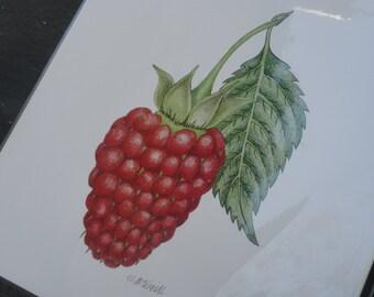 Print of Beautiful Hand Drawn Raspberry