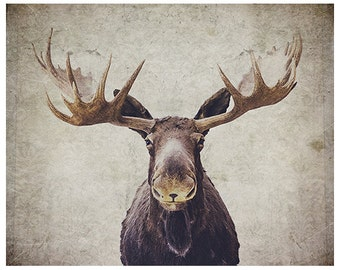 Moose photograph - wildlife photograph - antlers photograph - moose antlers - rustic photograph - rustic moose antlers - brown wall art