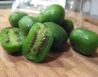7 Issai Baby Kiwi Tree Seeds-1079