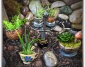 Miniature plants // Fairy House Accessory // Fairy Gardening