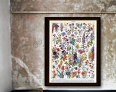 French Botanical Flowers 2 Super Large Poster Print On Photo Paper Delphinium, Hollyhock, Tulips, Zinnias 16x20 to 30x40