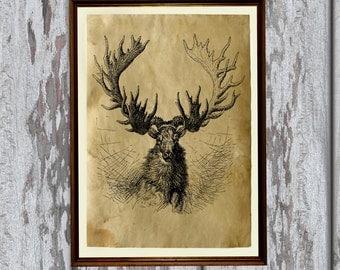 Animal illustration Moose print nature art Old paper home decor AK255