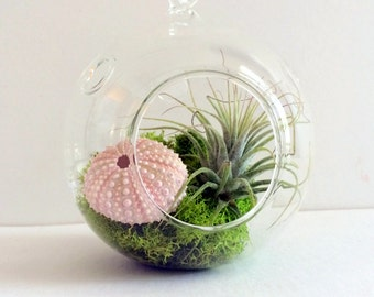 Orb Air Plant Hanging Terrarium Clear Glass Orb Kit with Single Sea Urchin