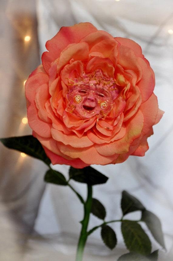 16 rose pais - 2 10