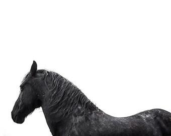 Horse photography, black stallion portrait. Friesian horse art print. Large horse art man cave, mancave wall decor Boyfriend husband gift