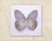 Butterfly Photography, Gray and Purple Photograph, Lavender Nursery Decor, Moth Still Life Art, Pastel Photo, 8x8 Picture