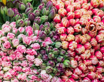Flower Photography - Paris Tulips at Market, Kitchen Decor,  French Home Decor, Large Wall Art