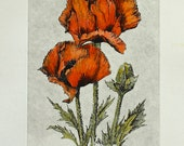 POPPIES is an original hand colored etching of a springtime favorite!