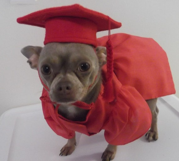 Graduation Cap For Small Dog