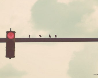 sky, birds, light, fine art photography
