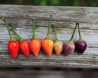 Organic Heirloom 200 Seeds Bolivian Rainbow Chilli Chili Vegetable Seeds Hot Pepper Heirloom Bulk F01