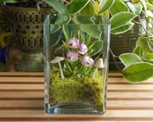 Tiny White & Purple Hawaiian Dendrobium Orchid Terrarium in Glass Vase