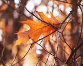 Autumn Photography, Autumn Leaves, Autumn Trees, Fall Maple Tree, Sunny Rustic Nature Tree Print, Autumn Decor
