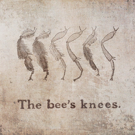 Items similar to the bee 39 s knees rustic typography print for Bee decorations for the home