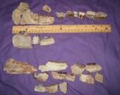 Fossil  Oreodont, Rhino, and Horse teeth - teachers aide - birthday gift