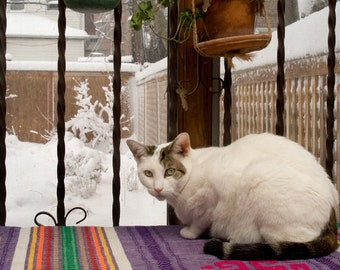 White cat looking at white snow