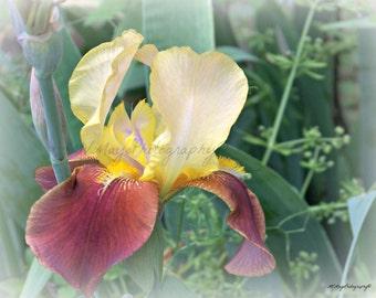 Iris Flower Photograph / Note Card / handmade / Free US Shipping