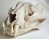 Tiger Skull Replica