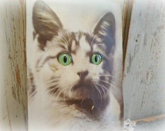 antique german post card that squeaks / cat with inset green eyes / rare paper ephemera