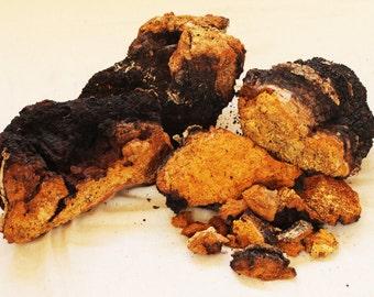 Wild Harvested Chaga Mushroom Powder - Five Pounds