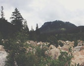 10x8 - Vintage Spring Collection - Mountain, Landscape, RMNP, Trees, Wilderness, Foggy