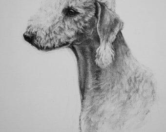 Bedlington Terrier dog art print fine art Limited Edition print from an original charcoal drawing