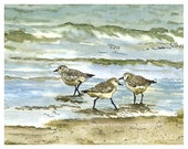 Beach House Decor Sandpipers Birds Pen and Ink Watercolor Painting Home Wall Decor Surf Ocean Waves Water Blue Aqua Green Giclee Print