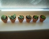 "Mini clay pots planted with   succulent or sedum- 1"" Terra Cotta Clay Pot"